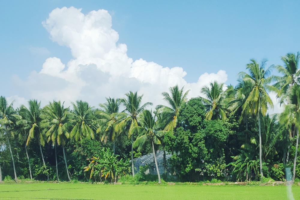 bataan rice fields