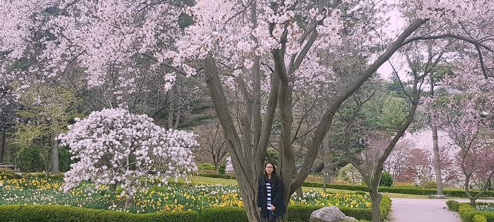 Nami Island and The Garden of Morning Calm: Day Trip from Seoul During Spring